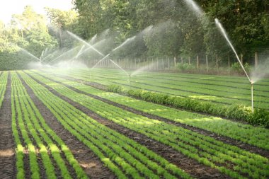 Watering of nursery plantation
