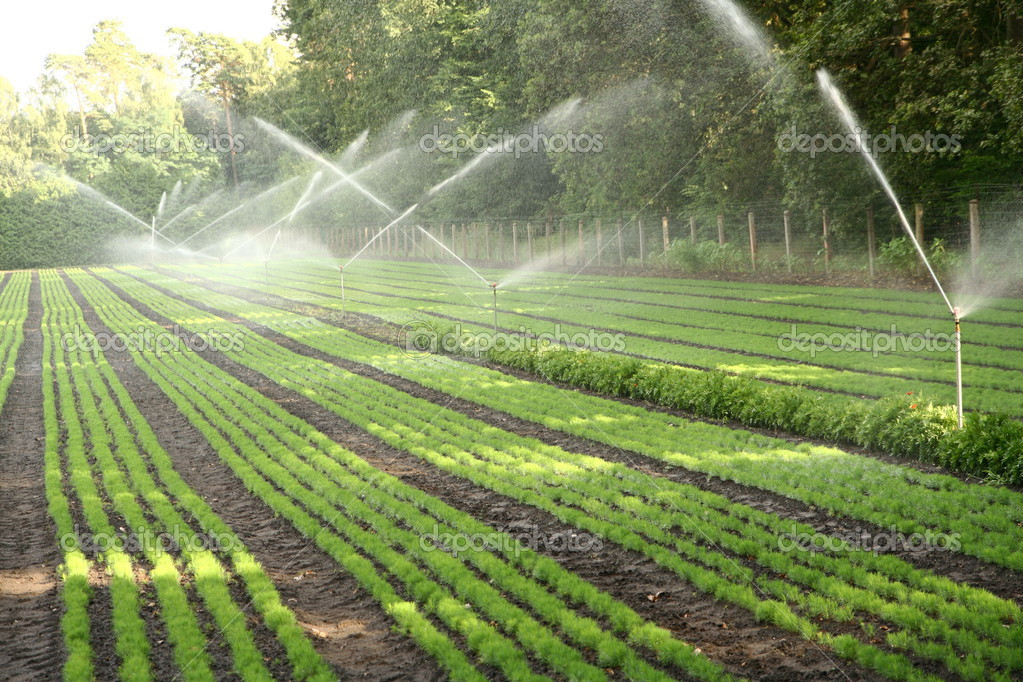 Watering of nursery plantation