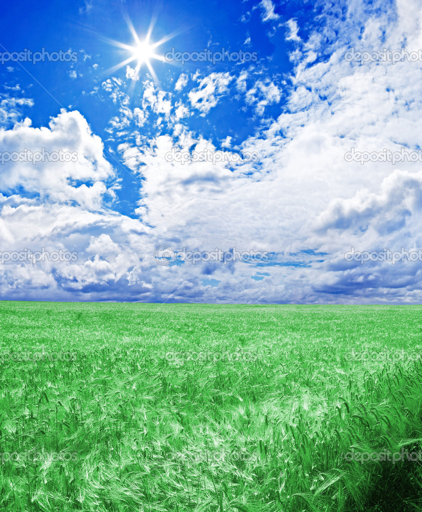 A green wheat field under an blue sky with the sun in zenith