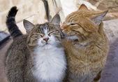 Fotografie Love couple of cats