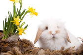 Fotografie Cute little white bunny