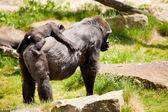 Gorillamutter mit Jungtieren