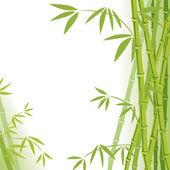 Fényképek bambusz háttér