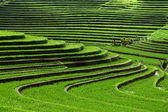 Photo Terrace rice fields, Bali, Indonesia