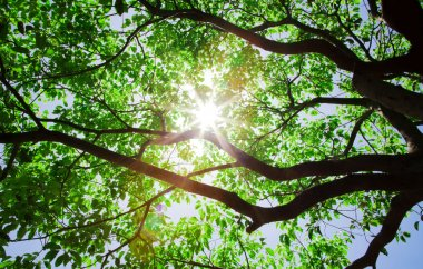 Sunlight pass through the tree