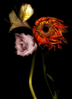 3 flowers on a black background