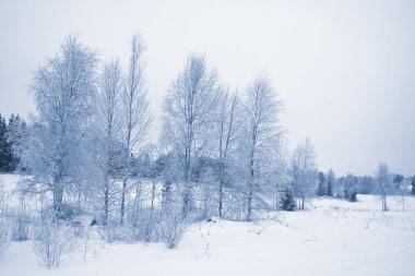 Winter lanscape / horizontal