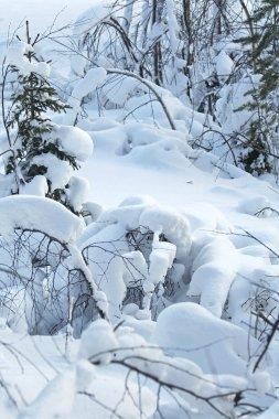Winter lanscape / snow forest