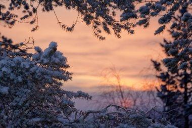 Winter sunrise lanscape