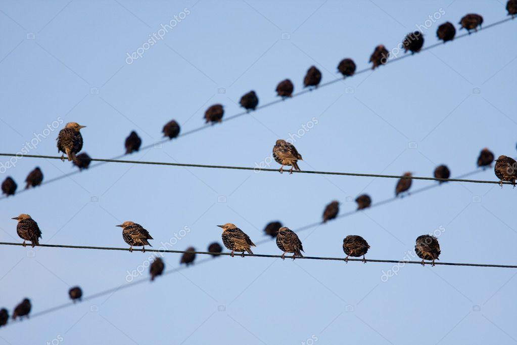 Bird on a wire — Stock Photo © holstphoto #3043158