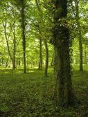 Fotografie Grüner Wald