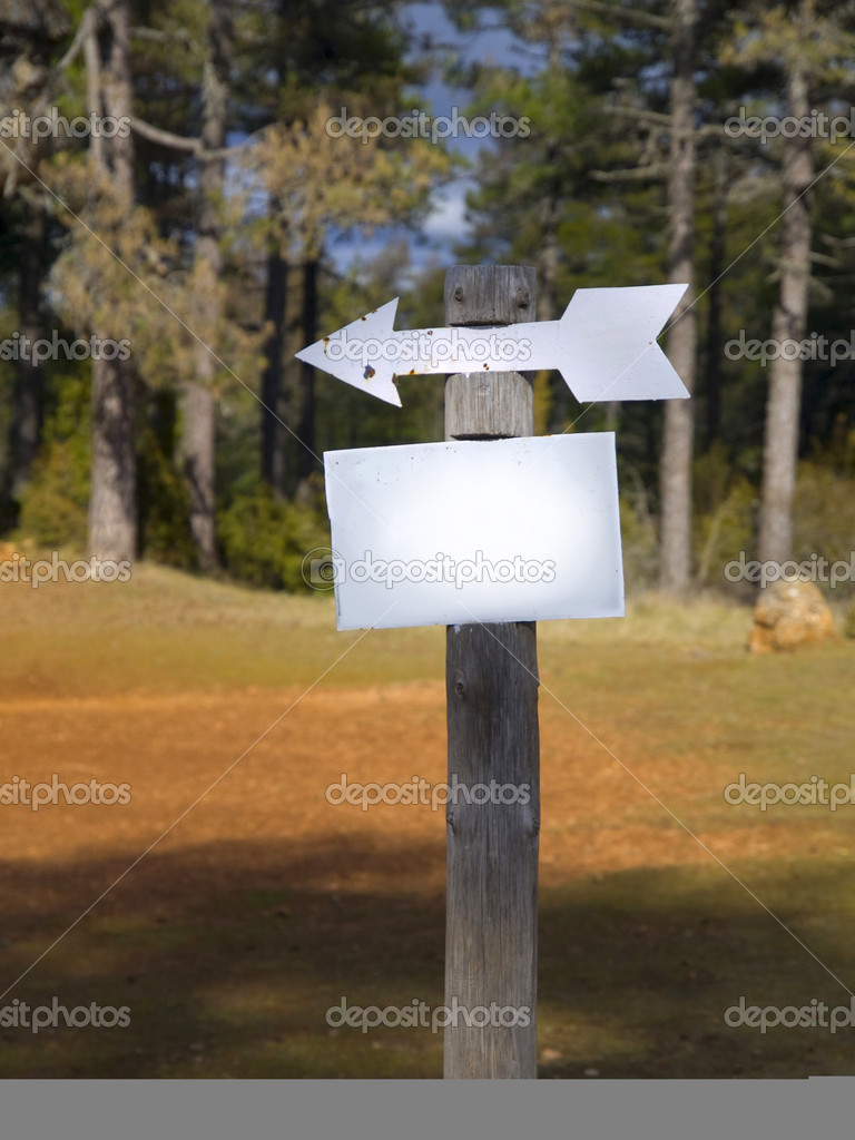 Blank sign in the forest