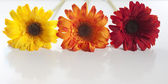 Photo Artificial flowers lined up