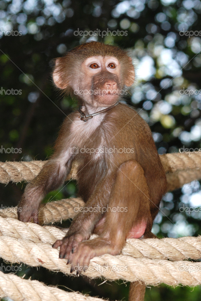 Animal monkey alone