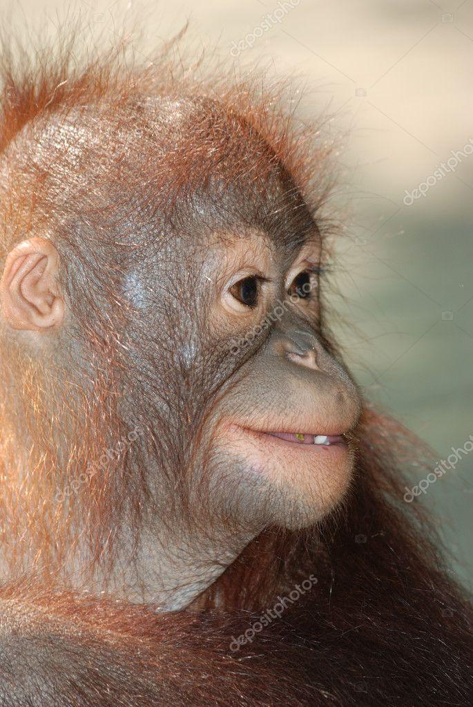 Animal monkey ape