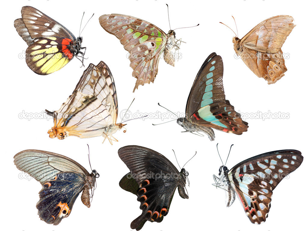 Butterfly collection side view