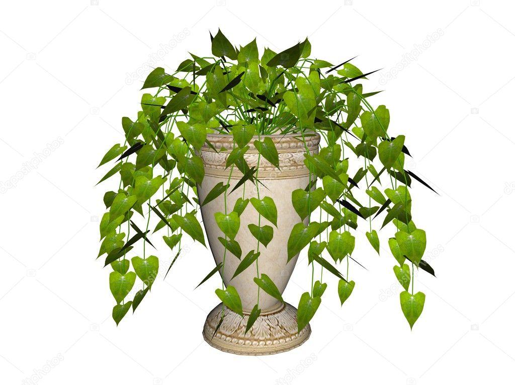 Pflanzen Hängend philodendron, hängend pflanzen — stockfoto © riedochse #3279299