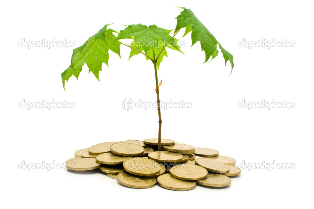 Coins and plant on a white background