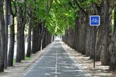 Cyklus lane