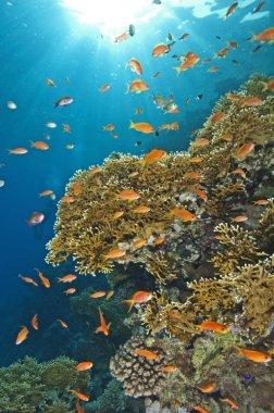 Stunning coral reef scene