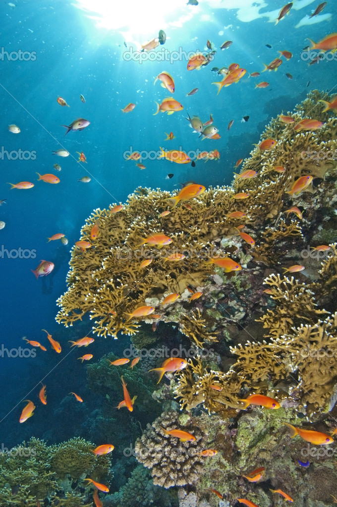 Stunning coral reef scene
