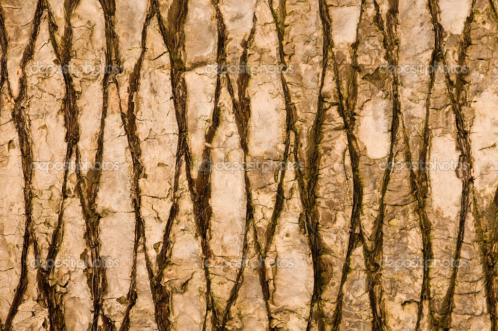 Texture of palm bark