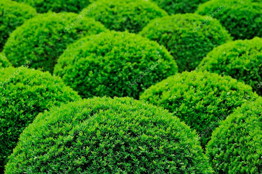 Lovely Garden Bush U2014 Stock Photo