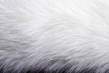 Closeup of white fur background texture stock vector