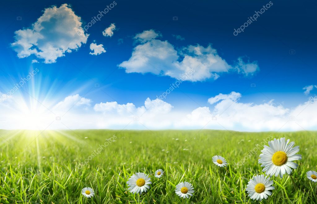 Wild daisies in the grass with sky