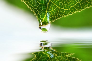 Leaf droplet over water