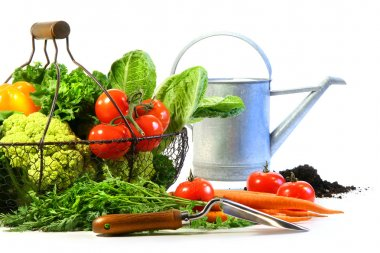 Fresh vegetables with watering can