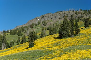 Montana Mountain Side