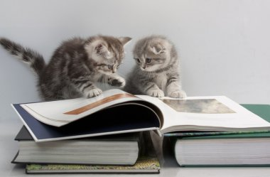 Two kittens are considering a book