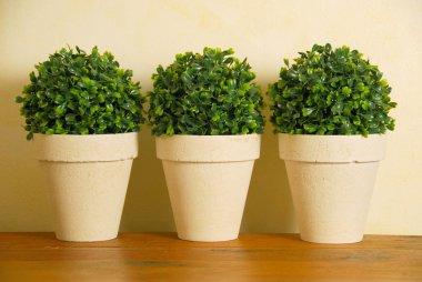 Three decorative pot plants