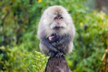 Monkey carrying baby monkey