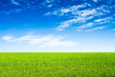 Blue sky and green grass scene