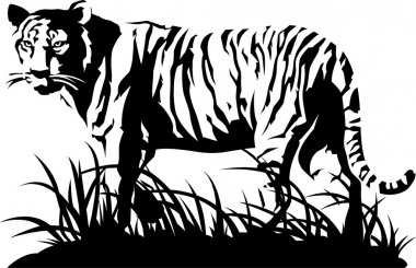 Tiger black and white. Vector