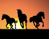 koně na slunce pozadí