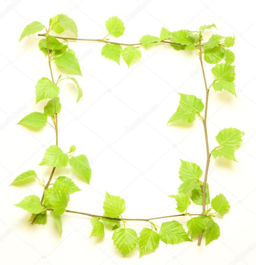 marco con verde abedul — Fotos de Stock © pavars #3425193