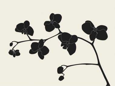 Orchid branch silhouette