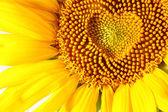 Fotografie tyčinky v podobě srdce na slunečnice