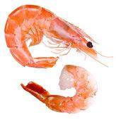 Photo Shrimp