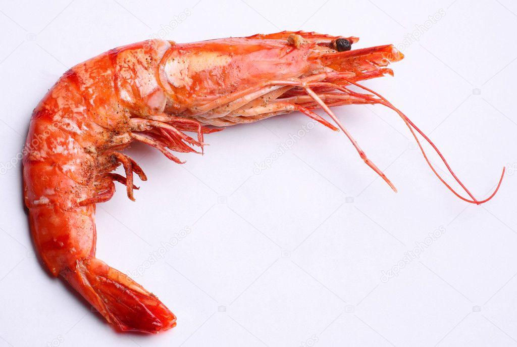 Shrimp — Stock Photo © Valentyn_Volkov #3611210
