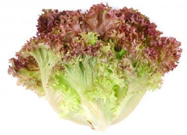 Bunch lettuce leaves.