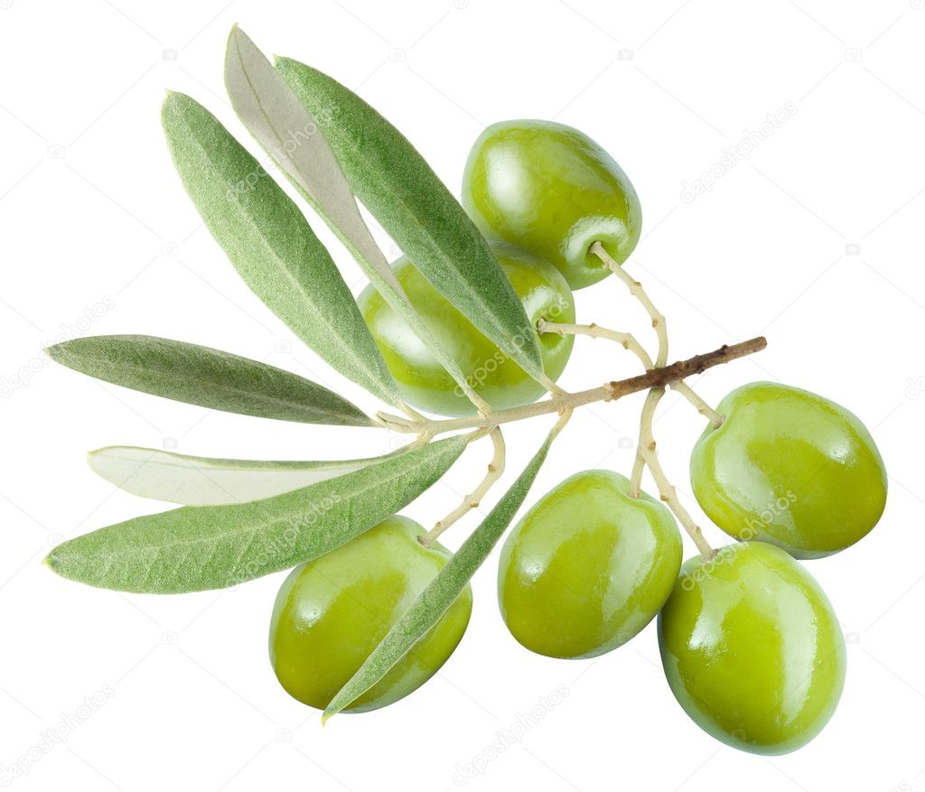 Branch with green olives.