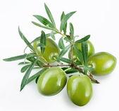 Fotografia olive verdi con un ramo su sfondo bianco