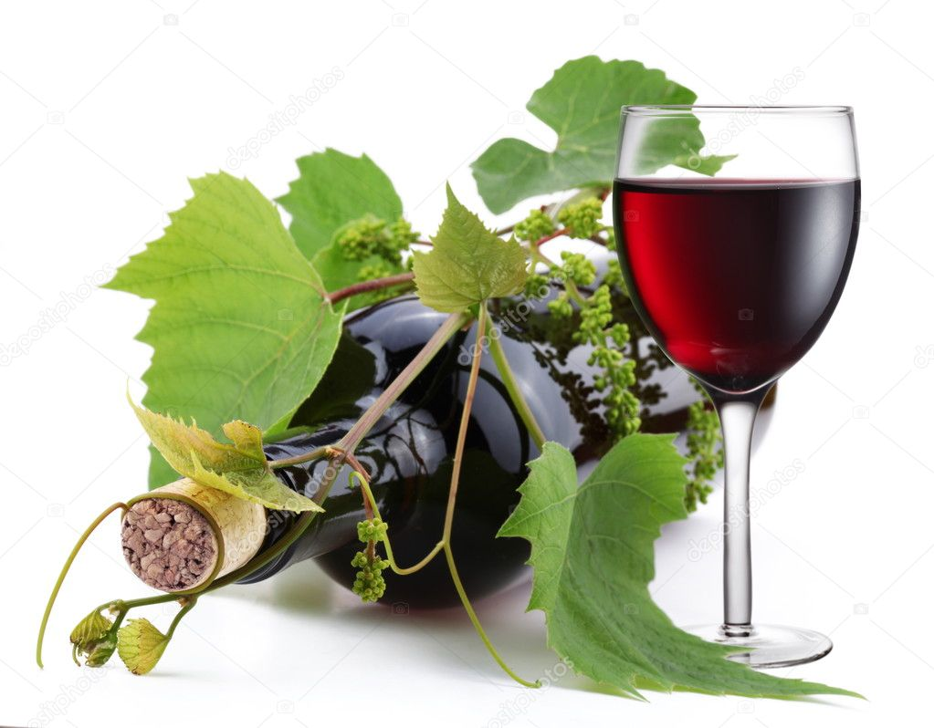 Bottle of wine in the vine on a white background