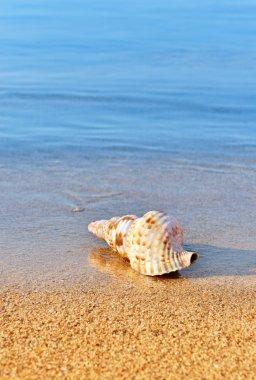 Seashell on serene beach