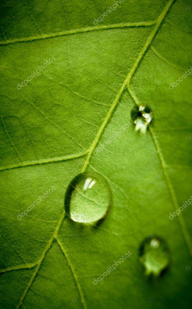 Oak leaf and drop, shallow dof