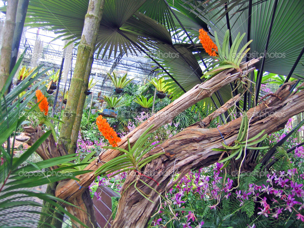 Rare tropical flowers and plants in a garden of orchids – Rare Garden Plants
